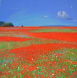 Yaverland Poppies