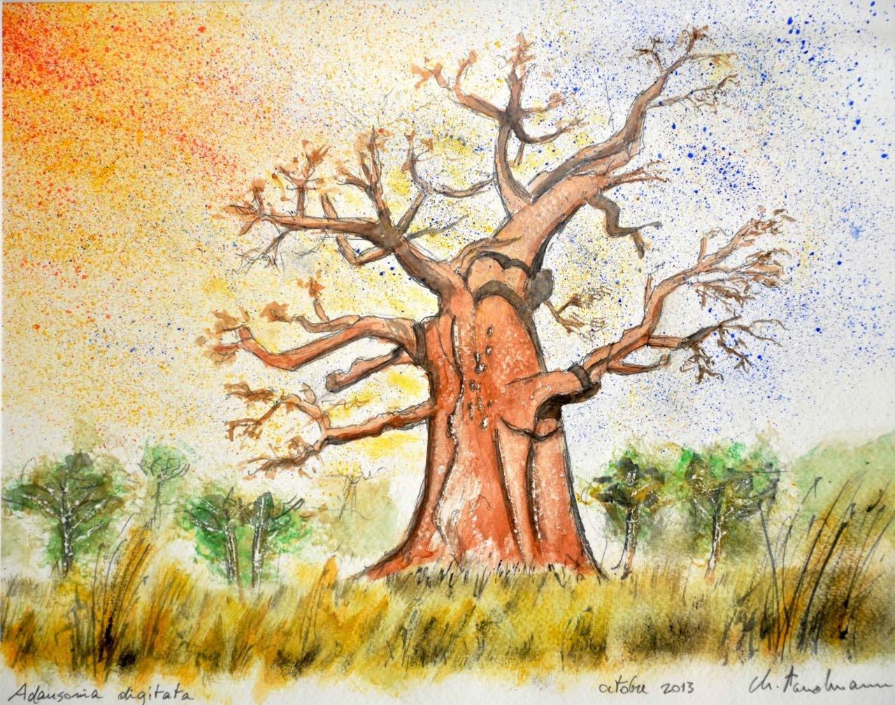 Baobab - Adansonia digitata