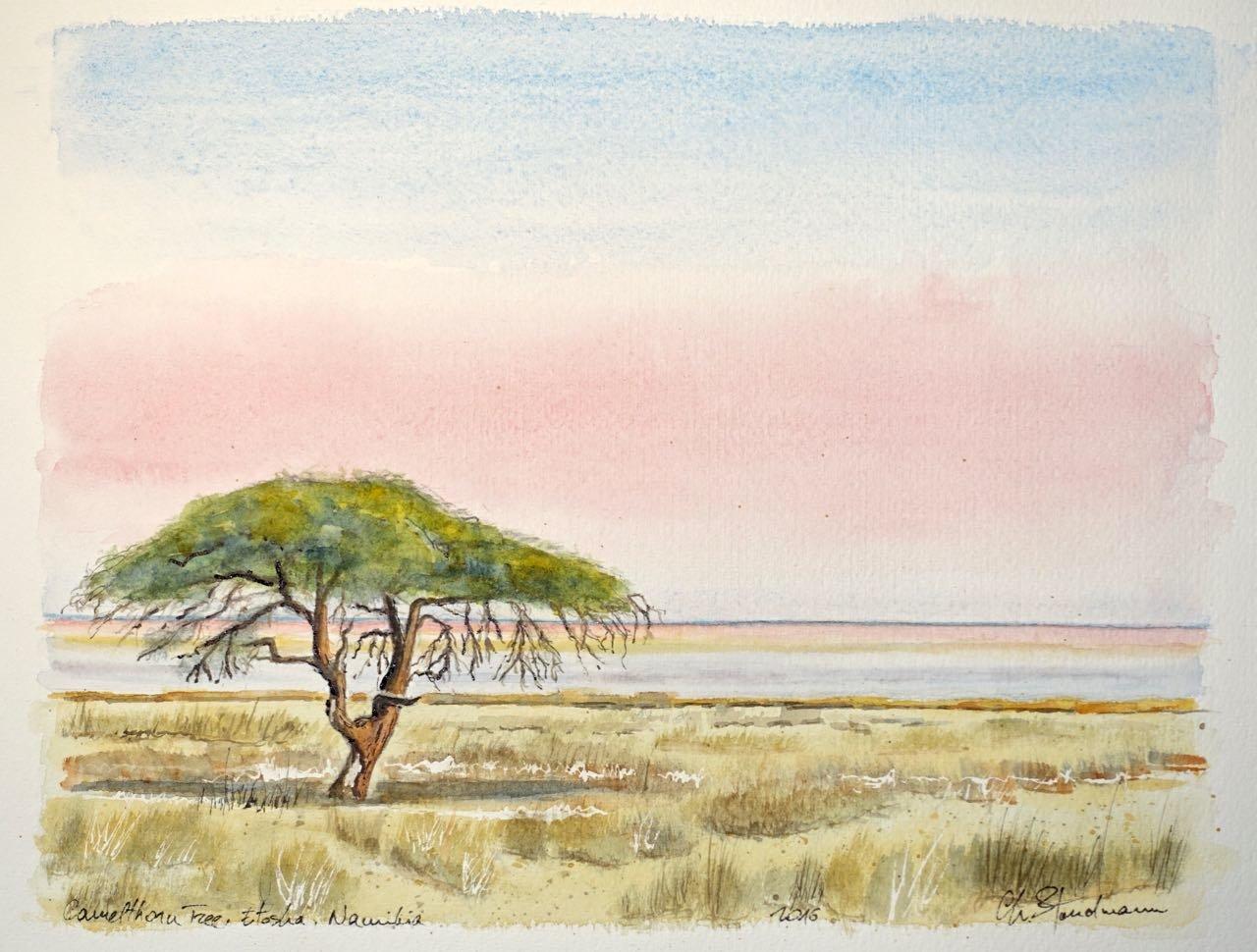 Camelthorn Tree, Etosha, Namibie