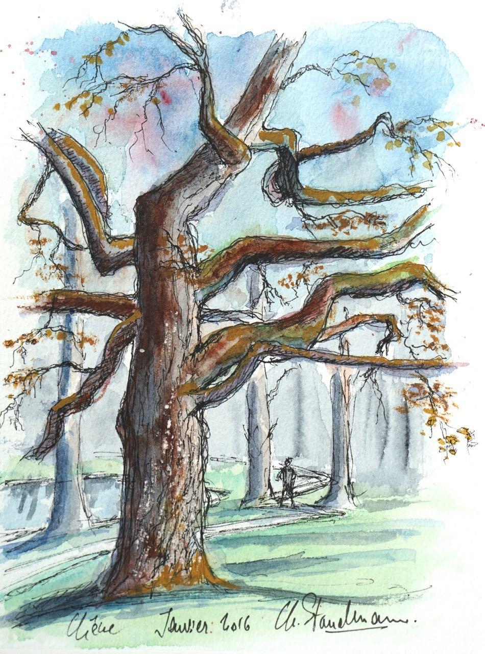 Sous-bois et chêne en hiver