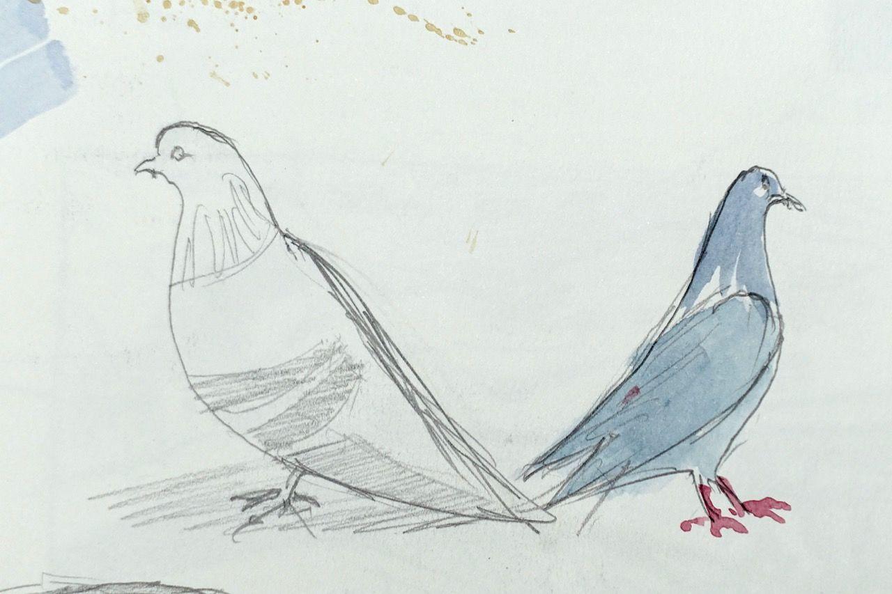 Pigeons domestiques