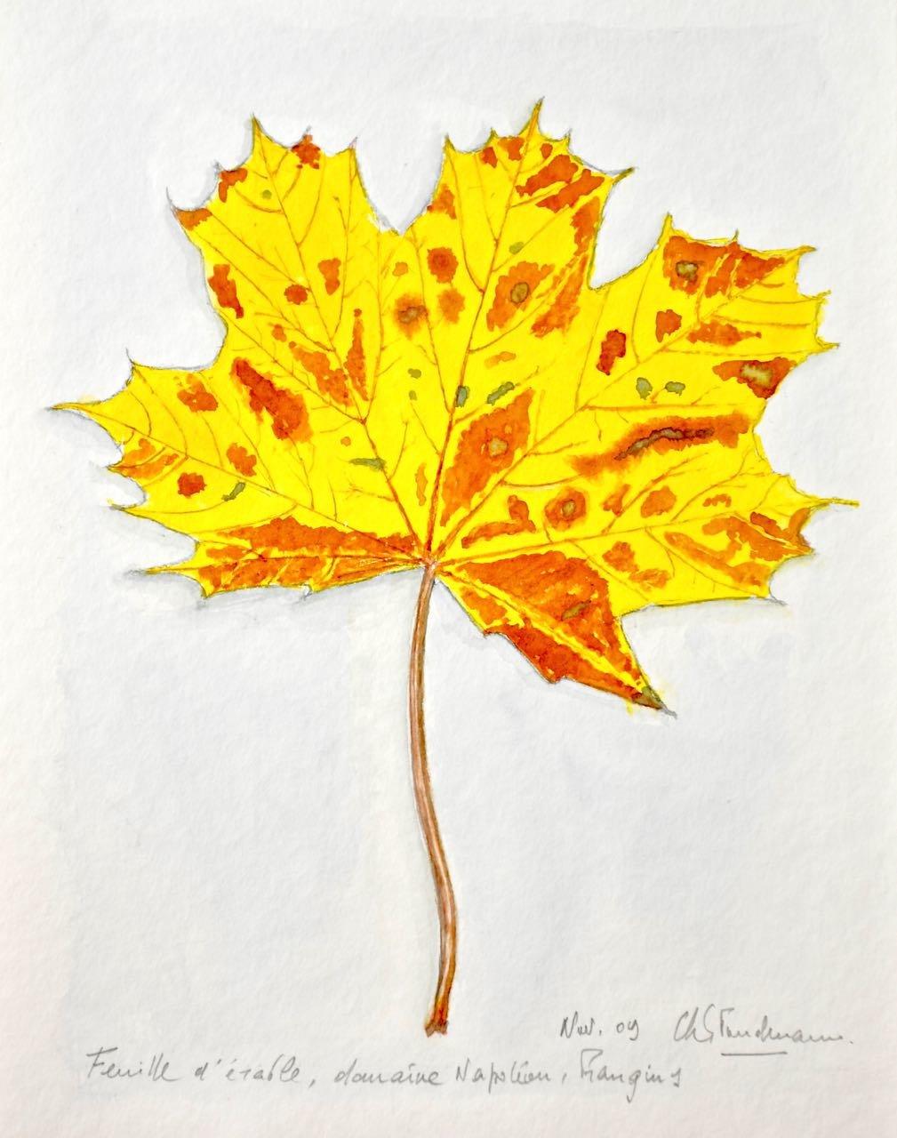 Feuille d'érable, automne