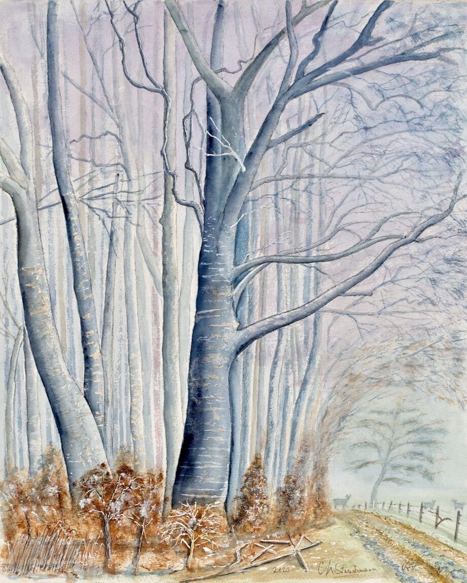 Lisière de forêt, Jura (VD)