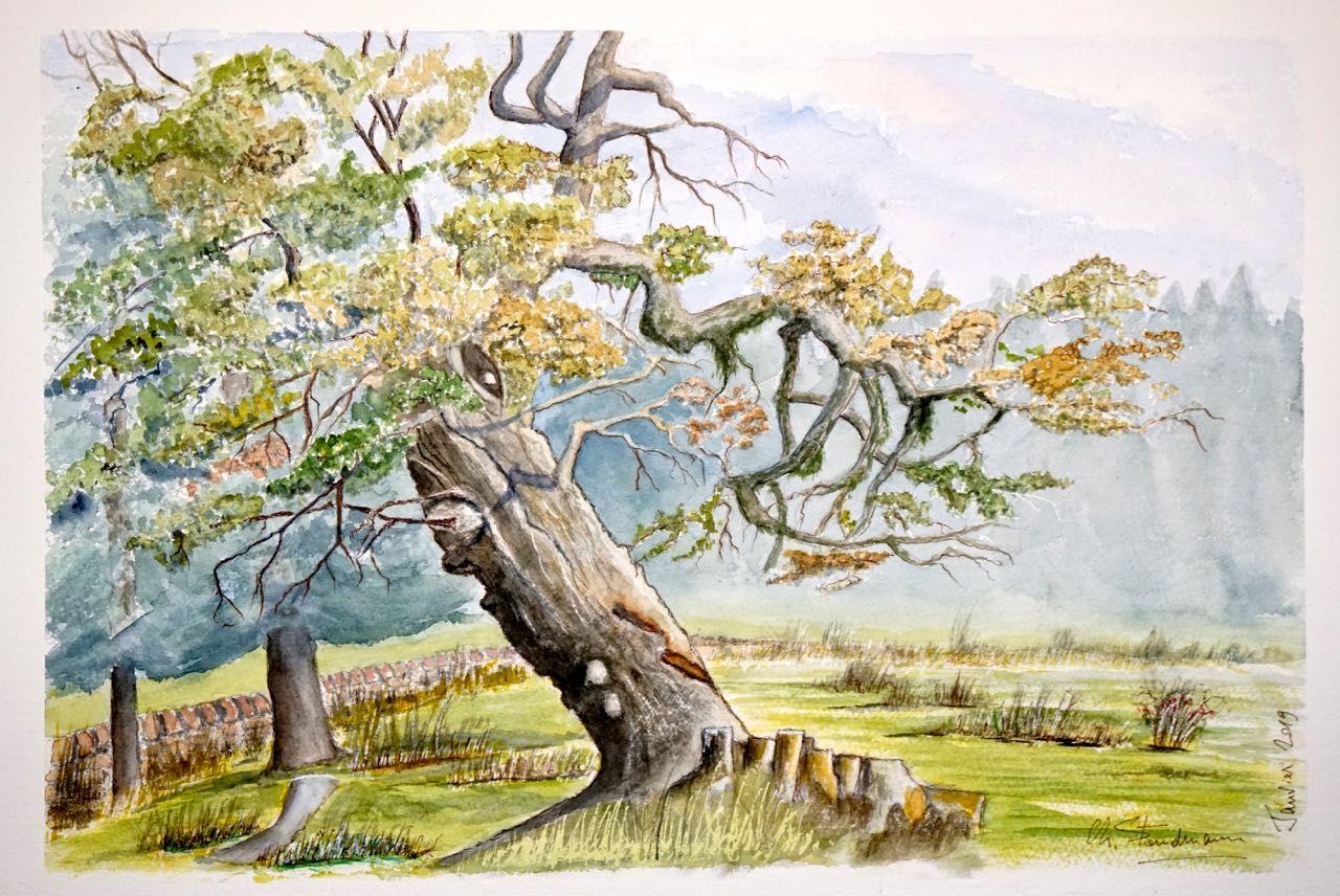 Vieil arbre du Jura vaudois