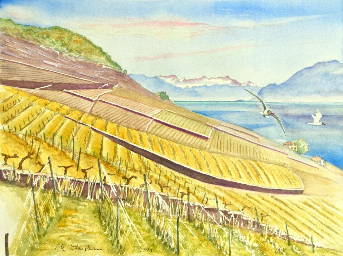 Vignoble du Lavaux et mouettes