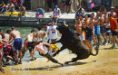 Bulls to the Sea festival Denia July 2011
