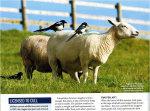 In BBC Wildlife Magazine