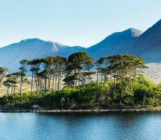 Derryclare pines