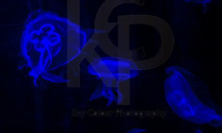 KCP-Ref-01431