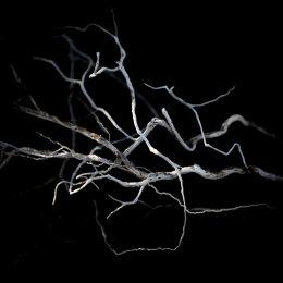 1001-driftwood twigs