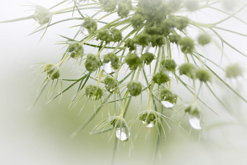 1006 - seed head two