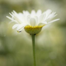 1007-white flower three