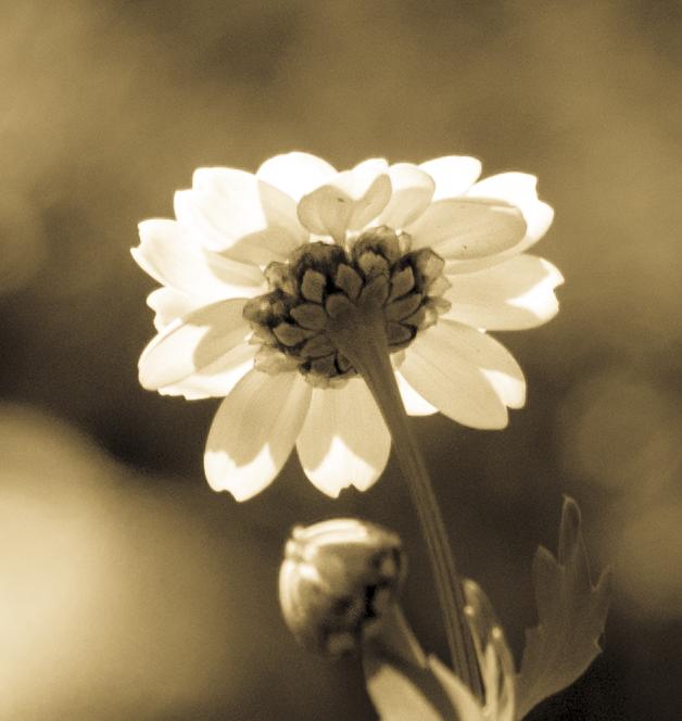 1010-white flower five
