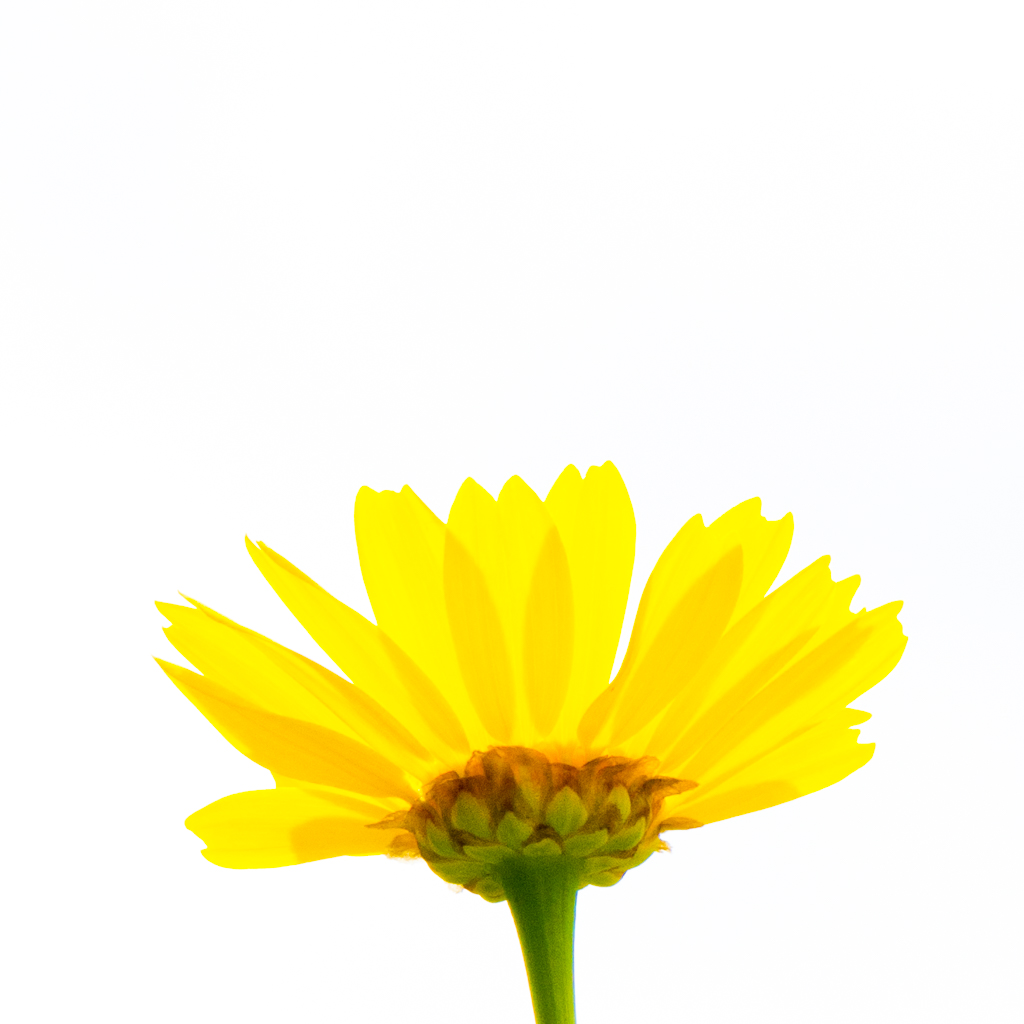 1011-yellow flower one