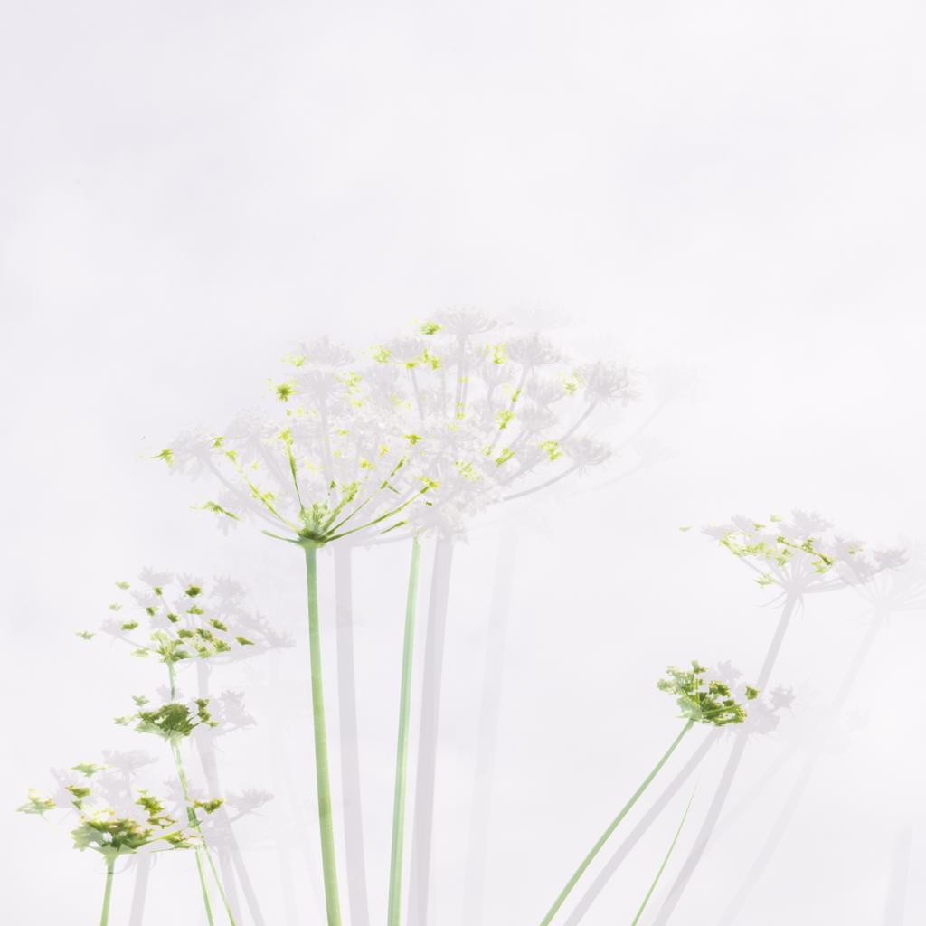 1012-white flower six MX