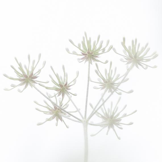 1013-white flower seven