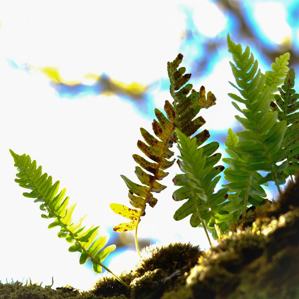 1026-mini fern one