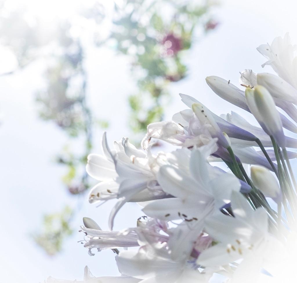 1028-white flower nine