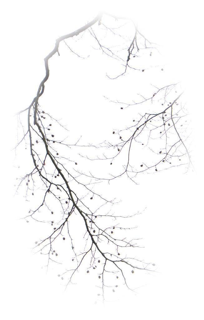 1031 - twig one