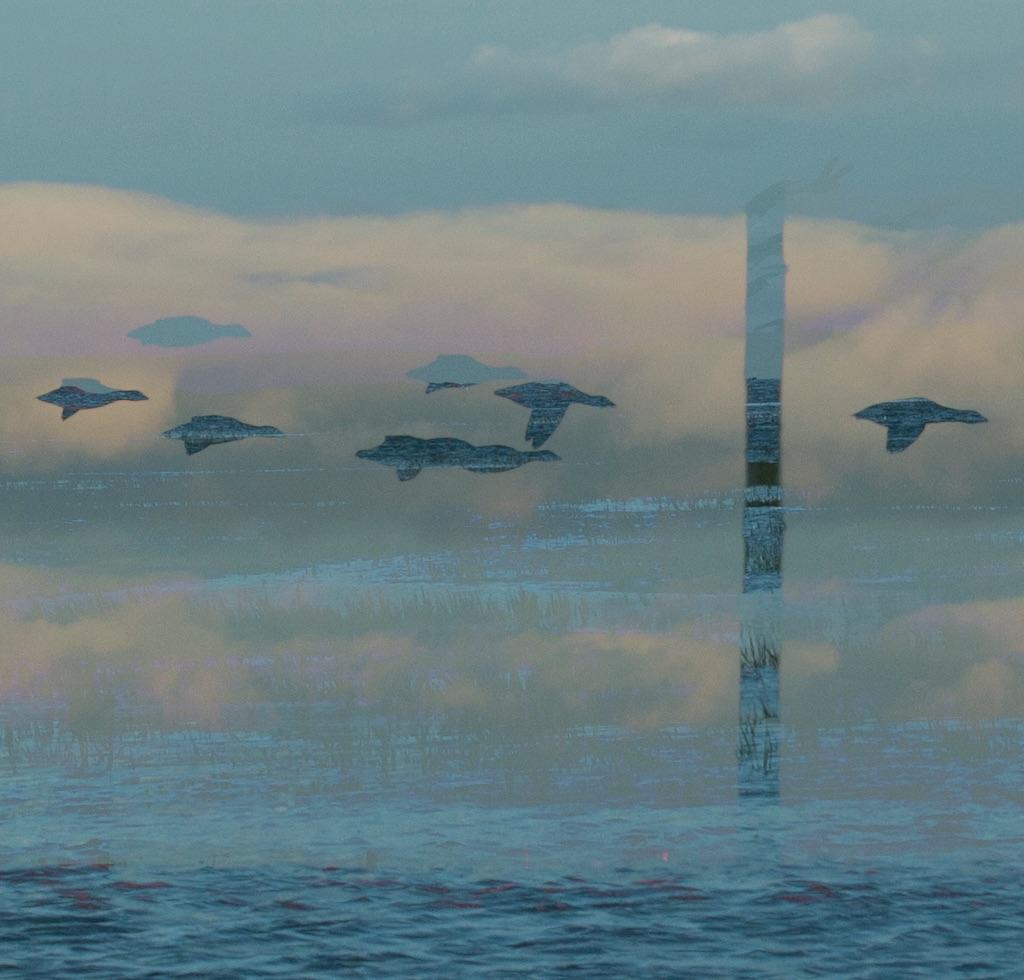 2018 - lindisfarne geese MX