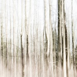 4009 - birch wood one ICM
