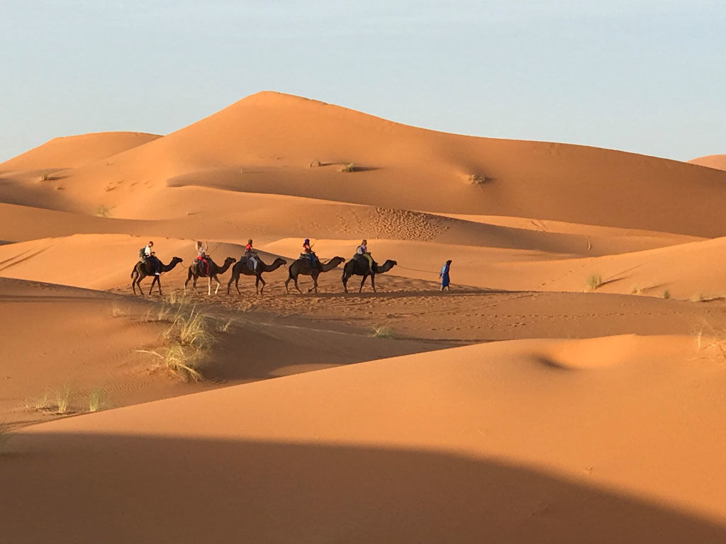 camels - one