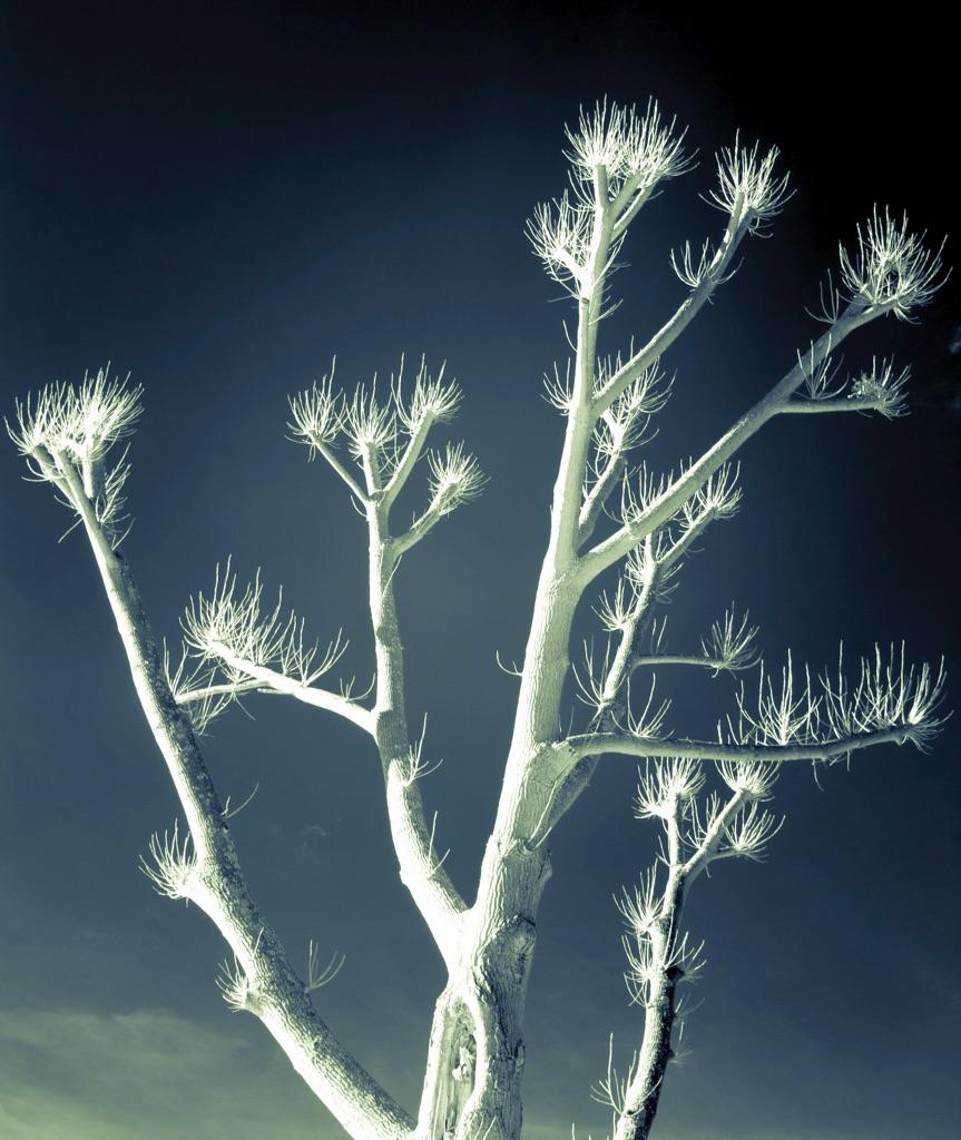 4014 - henley tree IR