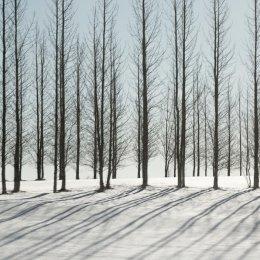 4001 - iceland trees