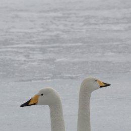 Hokkaido 007