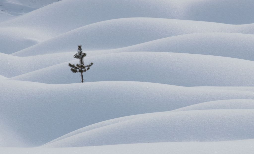 Canadian Rockies 003: snow pattern one