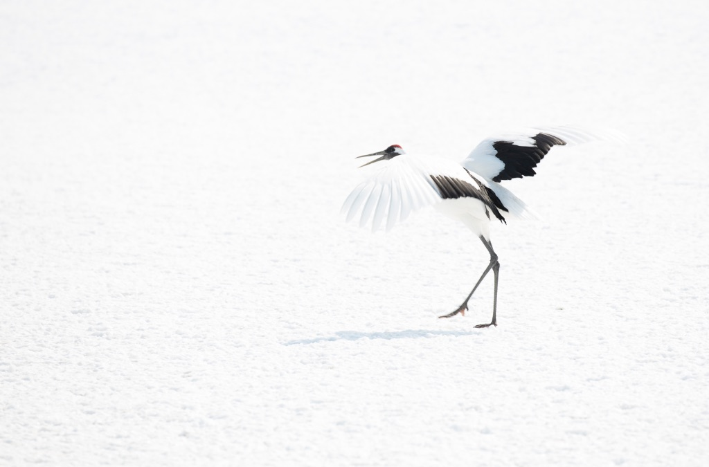 Hokkaido 021