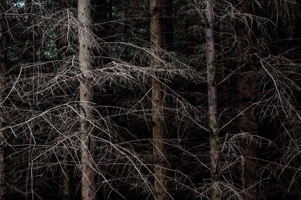 4019 - scottish dark wood