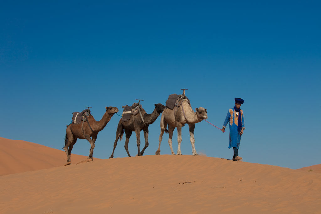 camels - two