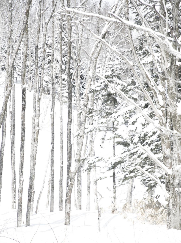 Hokkaido 026