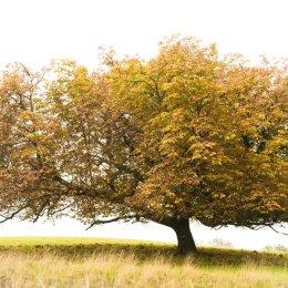4005 - stonor tree