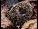 10 COM Hedgehog by Diane Spencer