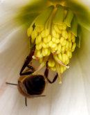 Buzy Bee