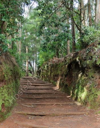 Parque Santo Da Serra