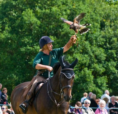 Falconry display on horseback
