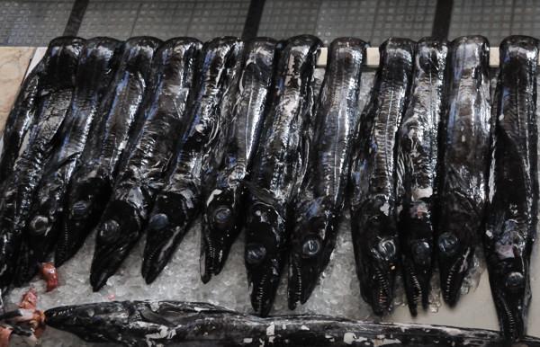 Black Scabbard Fish