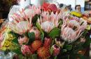 Funchal Flower Market