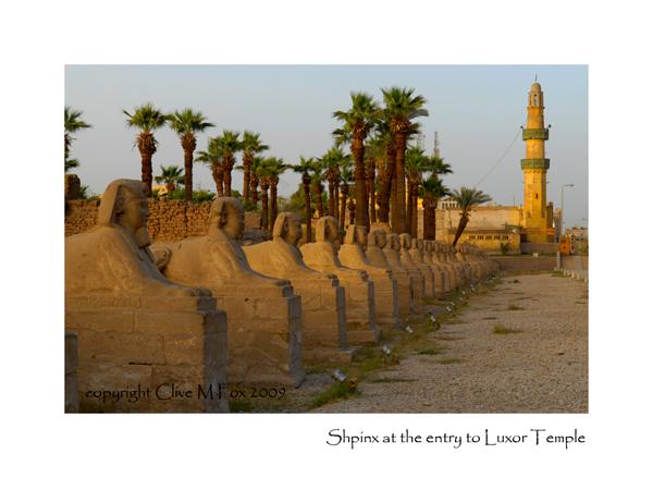 Sphinx at Luxor Temple
