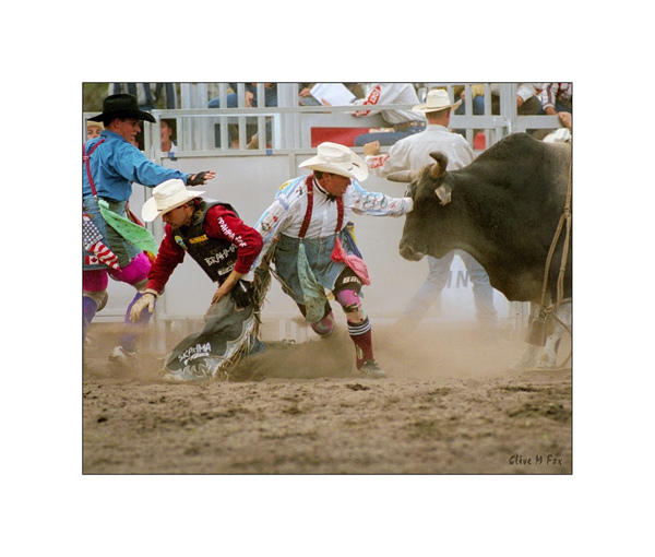 Bull Fighters in Action