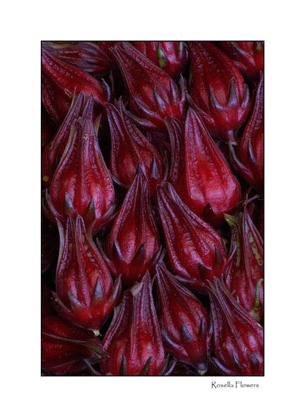 Rosella Flowers
