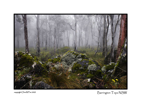 Mystical Forest<br>