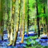 Bluebell-Wood---In-a-Spring-Light