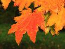 Autumn Scene, Olive Taylor