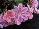 Raindrops on Flowers, Betty Varty