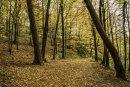 Bothel Woods