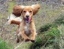 Molly the Flying Dog, Marilyn Mullaney